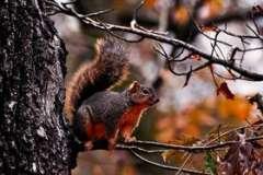 Что такое симбиоз? Деловые связи в мире животных